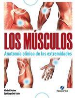 Músculos, Los